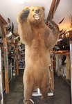 Full body bear