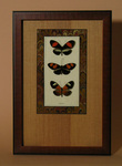 A Heliconidae butterfly display
