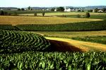 Iowa Corn Farm