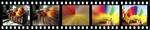 NewBlueFX Zoom Plugin