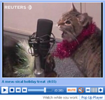 Jingle Cat Rehearsal