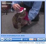 Santa Claws cover cat