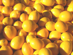 A ton of Meyer Lemons