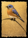 Bluebird etching by Melanie Fain