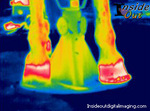 Thermographic image after Vettec application.