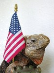 Iguana with US flag