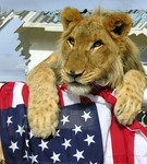 Lion with US flag