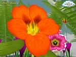 Flower Fantasy Screenshot