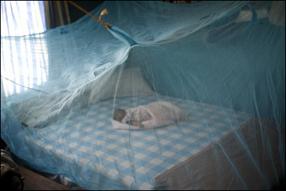 malaria and bed nets Dakar (thomson reuters foundation) - millions of insecticide-treated bed nets are being delivered to protect people from malaria in the west african nations of guinea-bissau and sierra leone, where the mosquito-borne disease is one of the biggest killers, aid agencies said on thursdaythe countries' health ministries are working with united.
