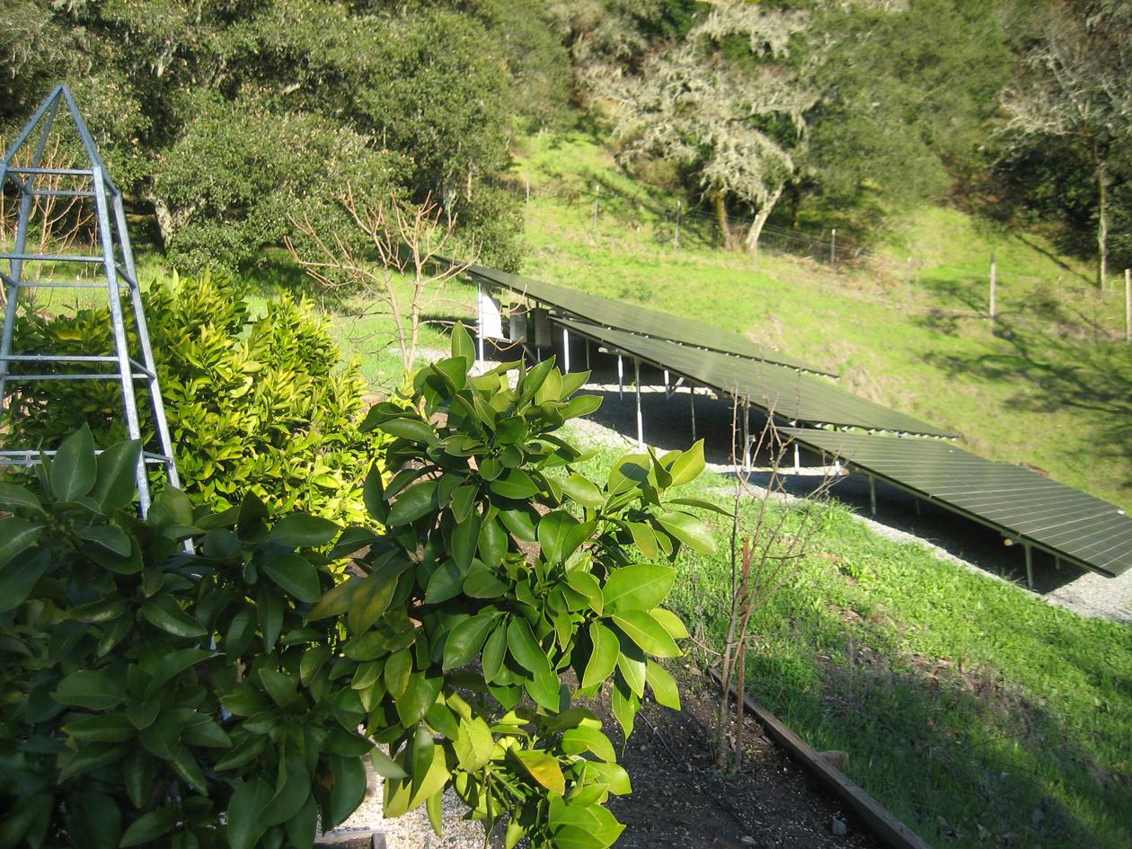 Medlock Ames Winery Announces Solar Power As Pillar Of