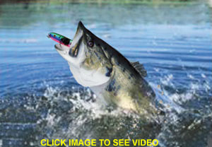 """review of hot new fishing lure: the """"bite light®"""" -- blinks blood red, Reel Combo"""