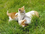 Springtime Kittens- Photo courtesy of Protect the Pets