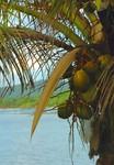 """Brooke Trace Photography """"Island Paradise"""""""