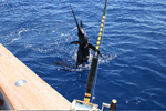 Sailfish Action