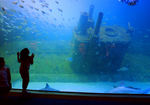 Watch the marine life stay cool in their 306,000 gallon Living