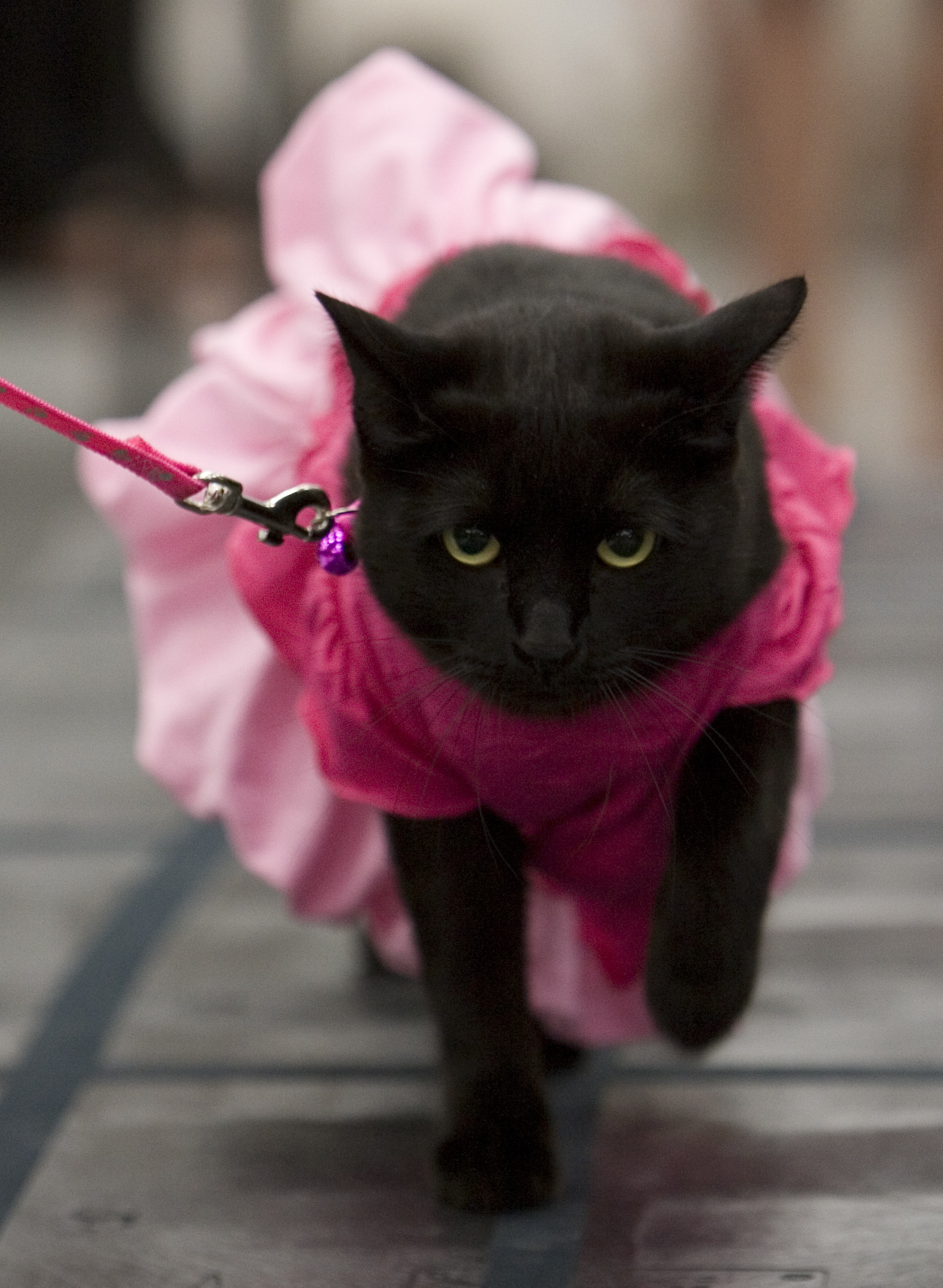 Pets Take To The Catwalk For Petco Fashion Show Saturday
