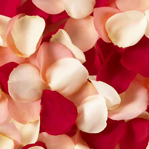 The Rose Petal Shop Announces Their Grand Opening On The World Wide Web
