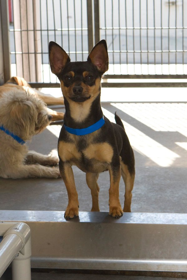 Best Friends Viral Psa Campaign Urges Public To Adopt