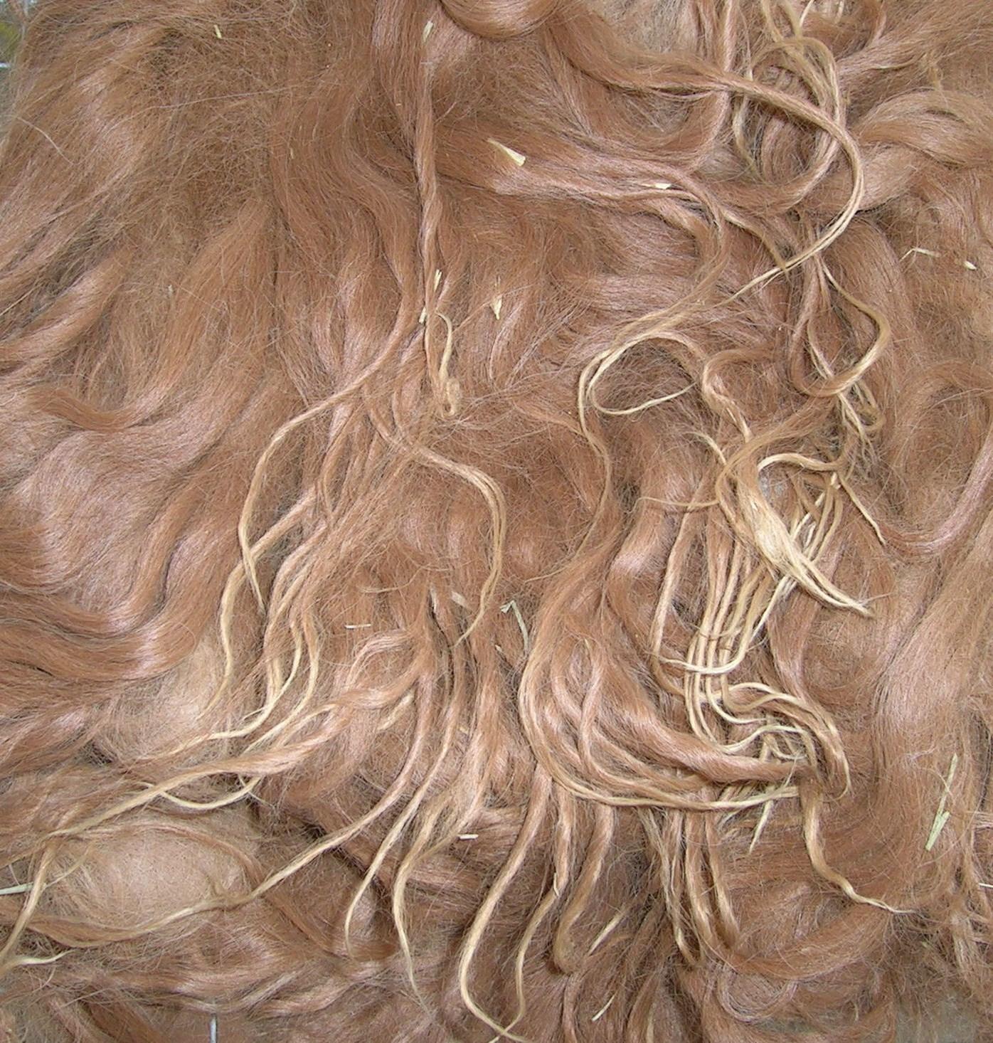 Texas Fiber Mill Processes First Suri Alpaca Fiber