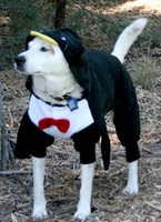 Norman in his Penguin costume & Halloween Dog Costumes for Every Size Dog -- From 2 Pounds up to 120 ...