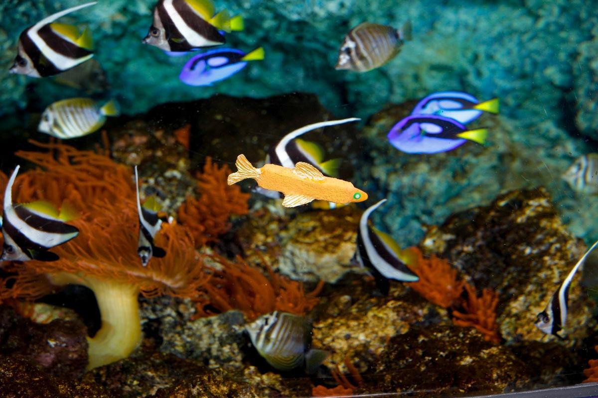 Buy fish for aquarium london -