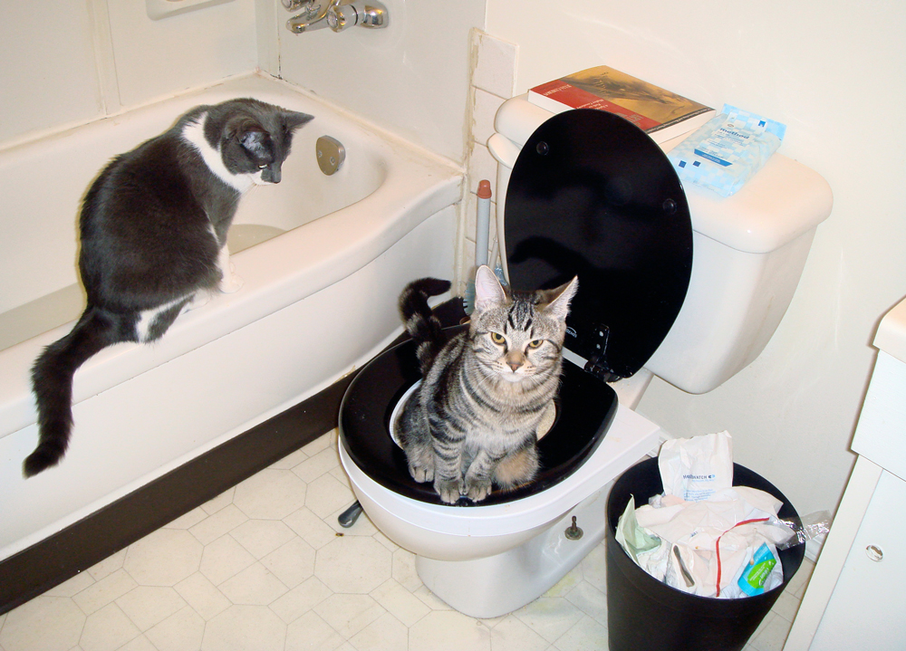 Potty Purrfection Citikitty Unveils Redesigned Cat Toilet