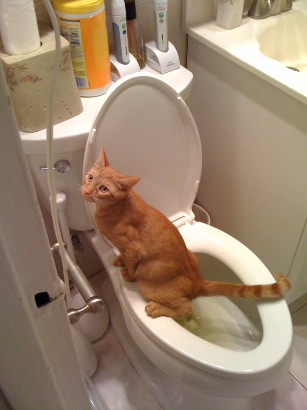 cat bacterial infection