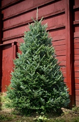 Green Valley Christmas Trees Meets Customer Demand For