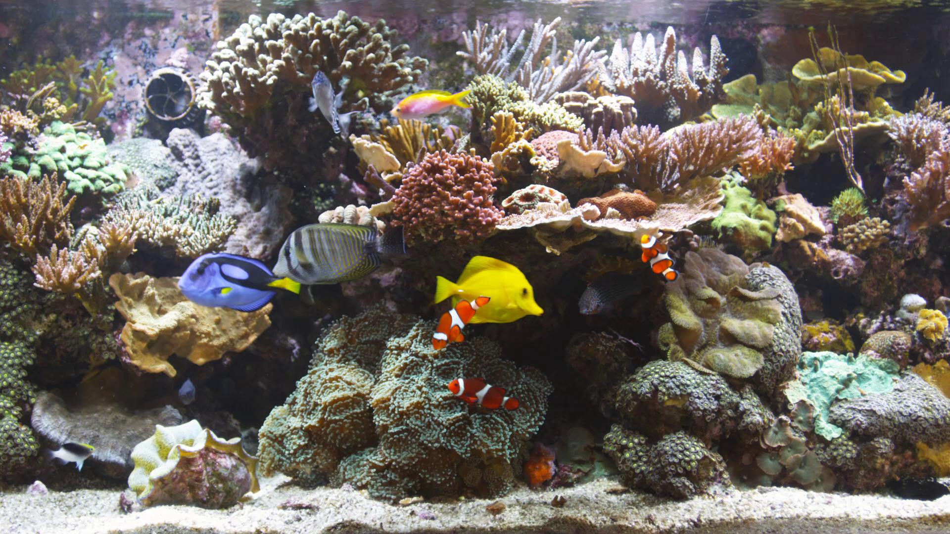 Bluscenes Coral Reef Aquarium Wallpaper 151723