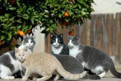 Community cats are in every neighborhood and town