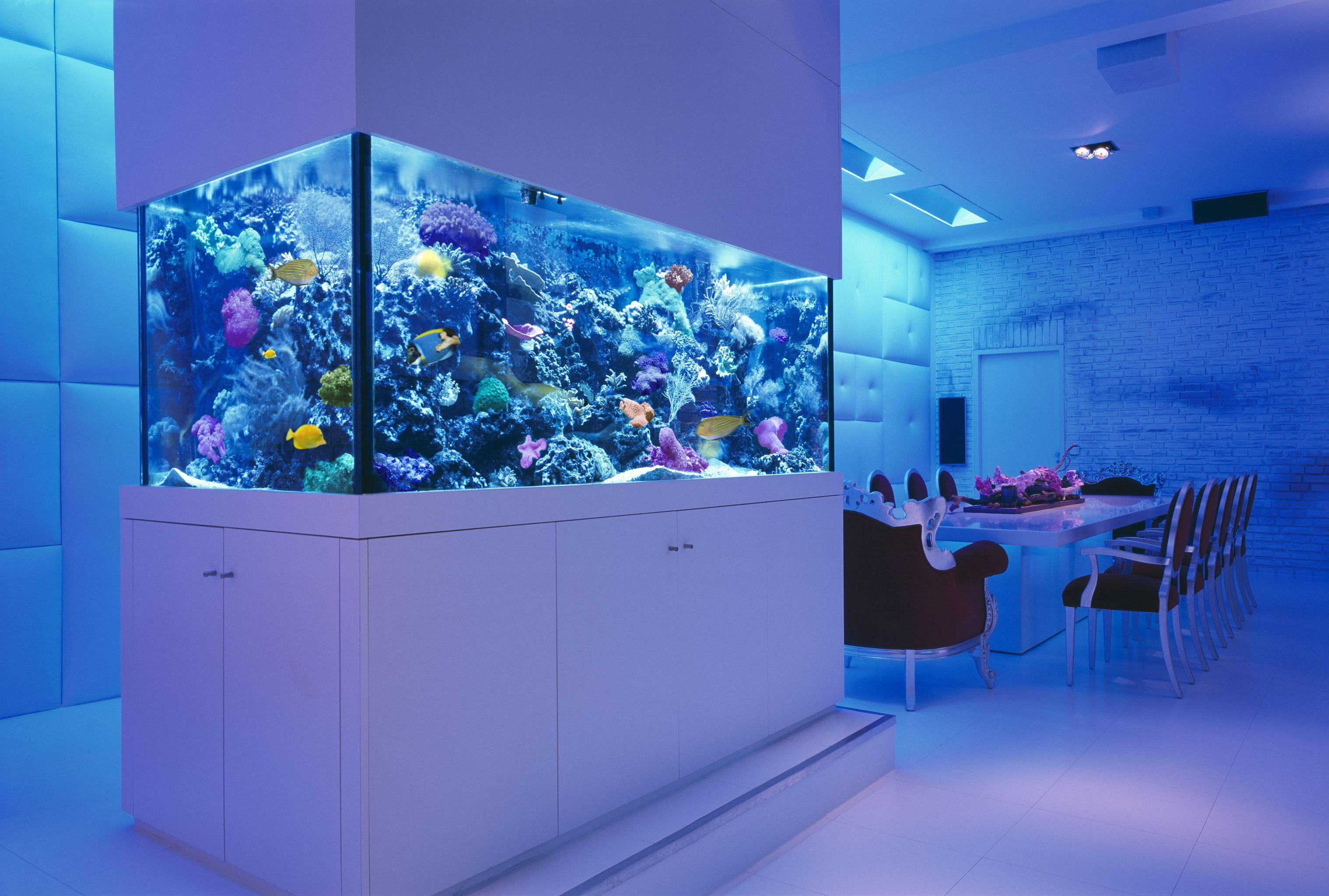 Cabinet aquarium fish tank tropical - Luxury Apartment With Giant Aquarium