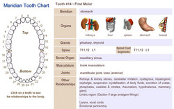 Meridian Tooth Chart Shows Teeth And Organ Relationships Free Seminar On Biological Dentistry Mercury Toxicity