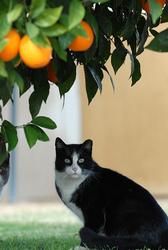 Community cat under orange tree