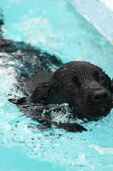 Pet vacation, vacation with pets, dog-friendly vacation, dog retreat, swimming with dogs