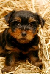 Trupanion pet insurance for dogs