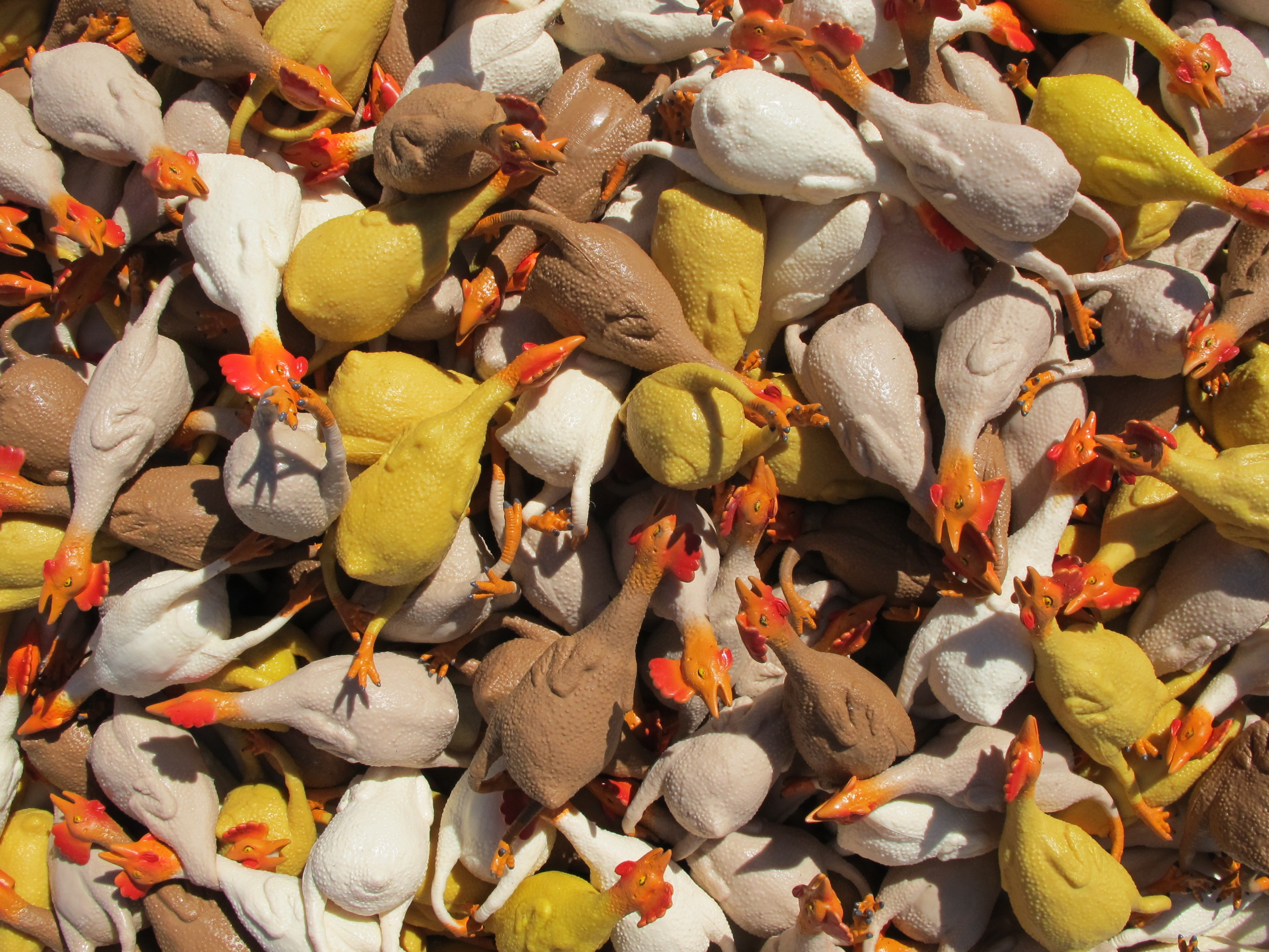 World Population By Race >> Flickin' Chickens for a new Guinness World Record