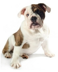 Pet Insurance for Young Pets