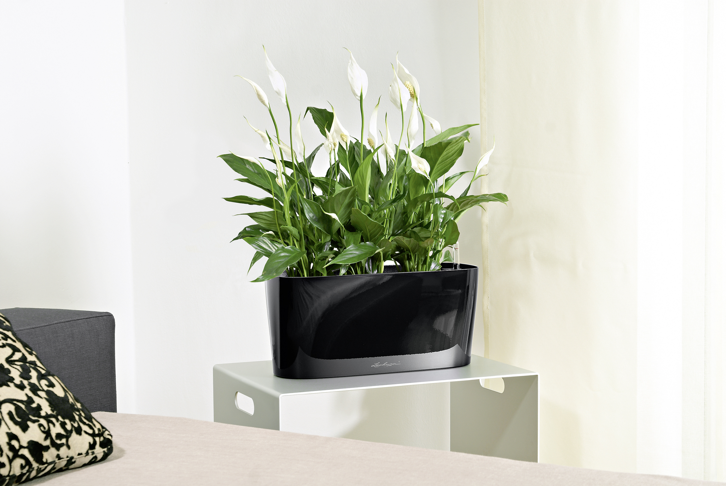 Plants take care of themselves with new lechuza self watering planters - Lechuza self watering planter ...