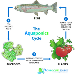 The aquaponic source poised to become the hub for the for The aquaponic source