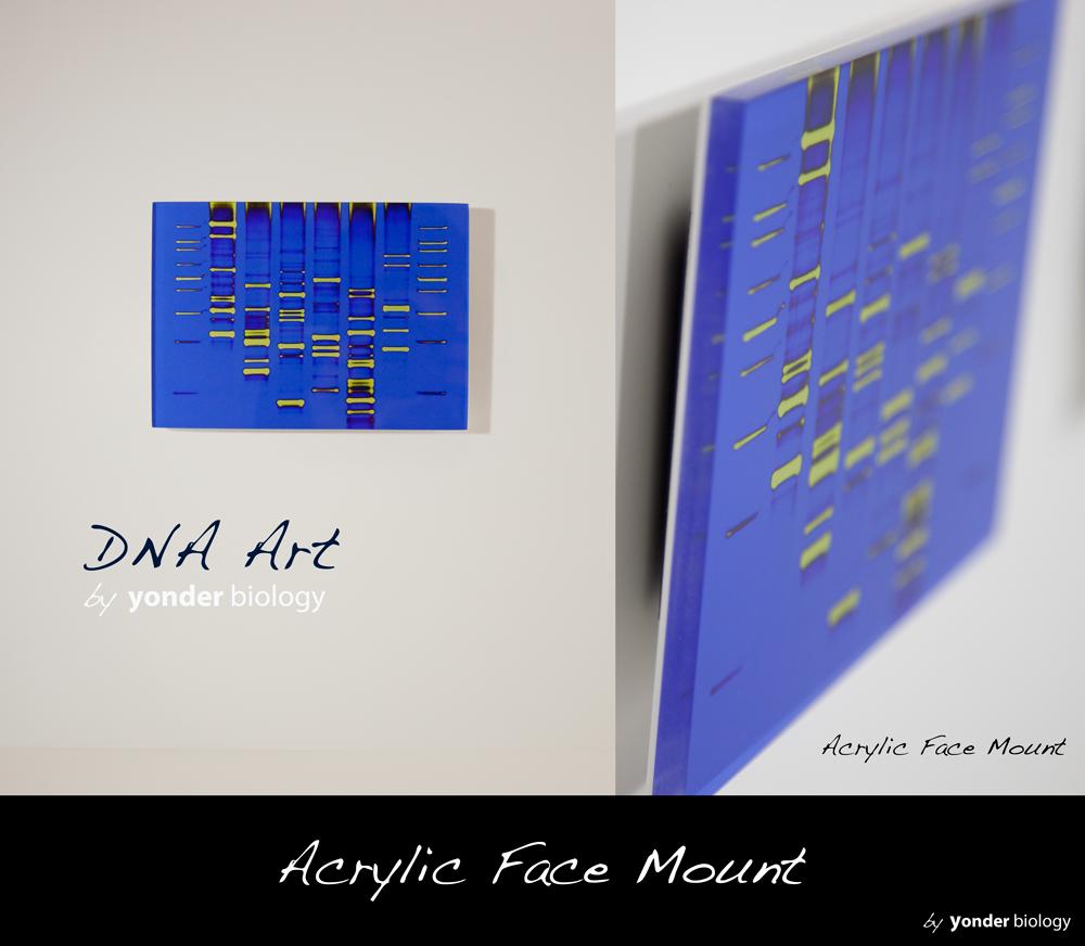 Yonder llc debuts dna art website for Personalized dna art