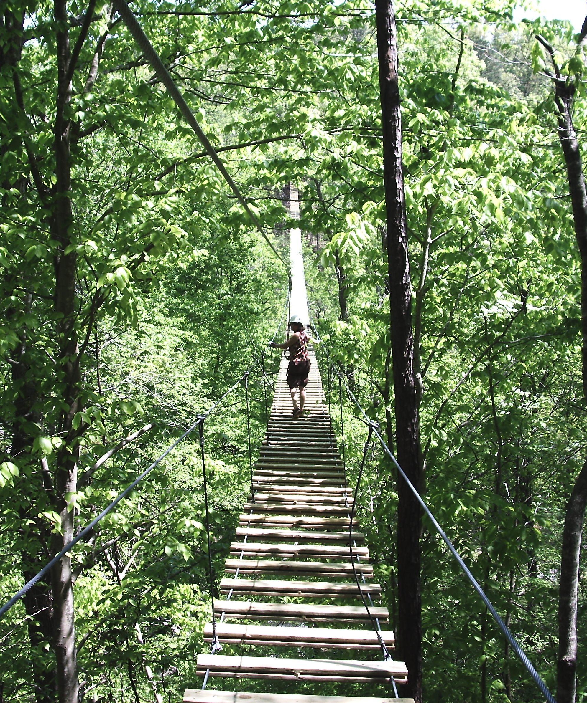 Georgia Canopy Tours
