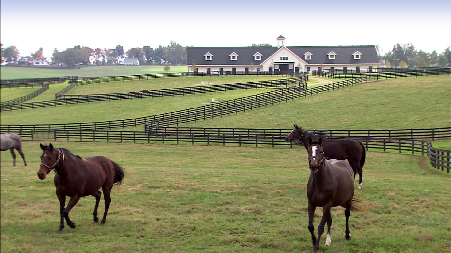 Horse farm images reverse search for Horse farm
