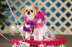 gI costume.JPG Halloween Costume Contests for Dogs at Fidos Festival USAs OctoberFETCH