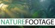 NatureFootage Logo