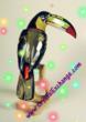 Swarovski Paradise Toucan