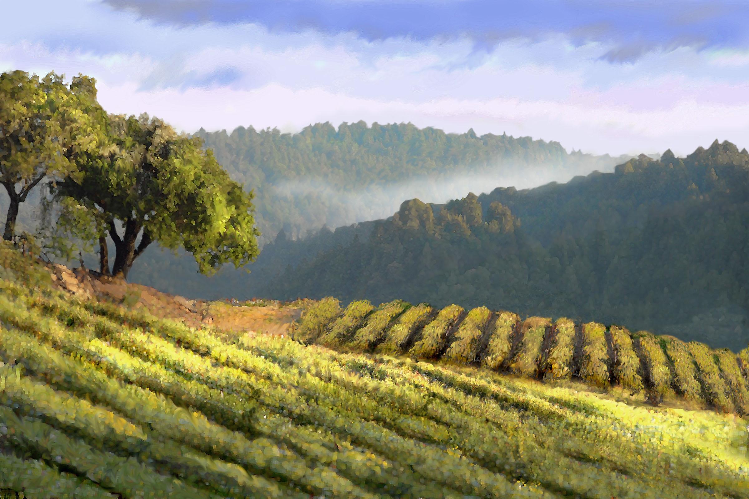 Вино семь красавиц 22 фотография