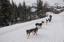 gI 0 Alpine39smaller International Pedigree Stage Stop Sled Dog Race Mushes out of Jackson Hole on January 28 with 22 Teams Speeding from Wyoming to Utah