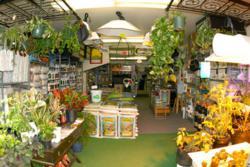 San Francisco Bay Area Sustainable Indoor Gardening Hydroponic