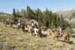 Horseback outfitters offer trips for every age and ability in Glenwood Springs