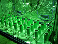 Amazing New Hydroponics Grow Box And Hydroponic Grow Tents